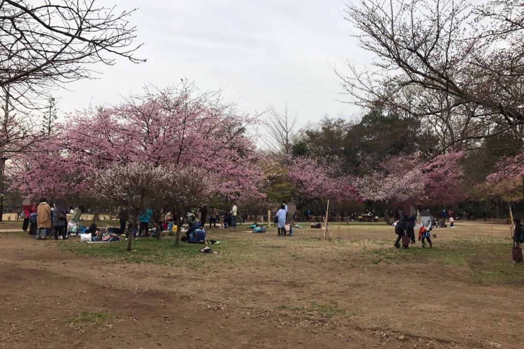 井の頭公園 花見