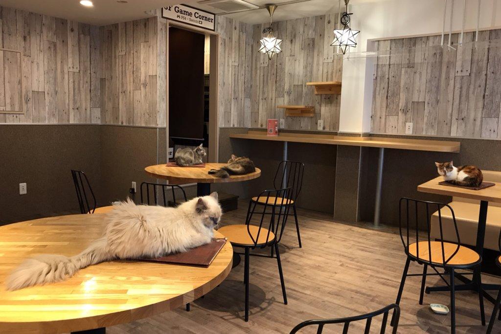 猫喫茶 空陸家plus