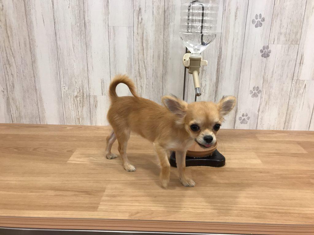 犬カフェRIO 吉祥寺