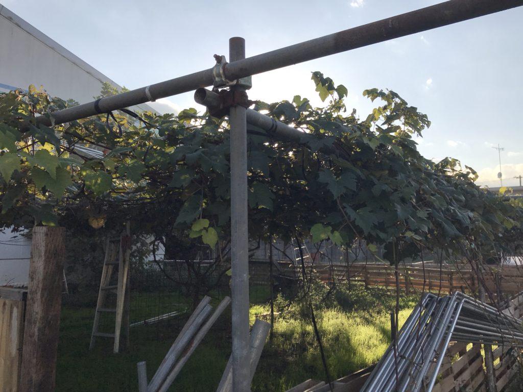 三鷹オーガニック農園